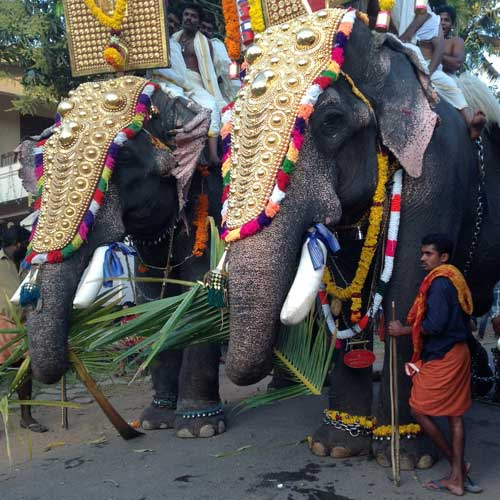 festive elephants in Kerala
